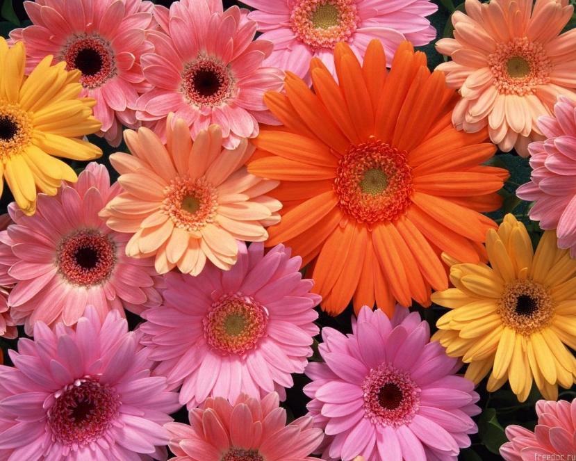 8 марта - Женский День, цветы |